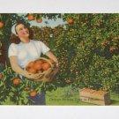 "Vintage Postcard Orange Picking In Florida ""Girl with basket of oranges"""