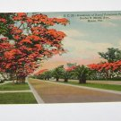Vintage Postcard Hundreds Royal Poinciana Trees S. Miami Ave Miami Florida