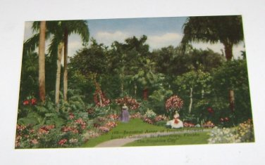 Vintage Postcard Tropical Flowers Sunken Gardens St Petersburg Florida