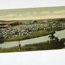 Vintage Postcard Sheep Ranch & Man Herding on Horse Montana?