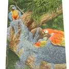 Vintage Postcard Macaw Family Parrot Jungle Miami Florida