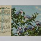 Vintage Postcard Legend of the Bleeding Heart Dove