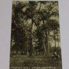 "Vintage Postcard ""The Elms"" Marion Wisconsin"