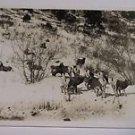 Vintage Postcard Rams on a mountain side