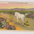Vintage Postcard Indian Travois Sled Nevada