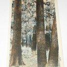 Vintage Postcard Hardwood Forest at Crossett Arkansas