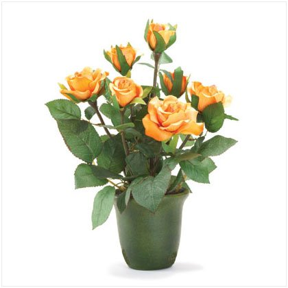 36231 Orange Roses
