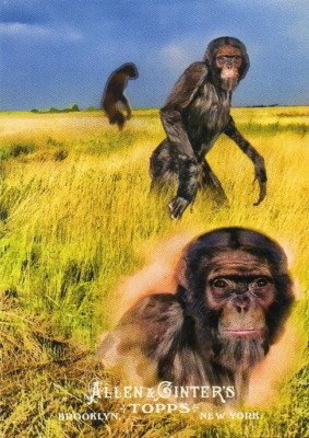 2011 Topps Allen and Ginter Ascent of Man #AOM20 Hominina