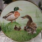 Mallard Waterbird Plates Danbury Mint Eric Tenney