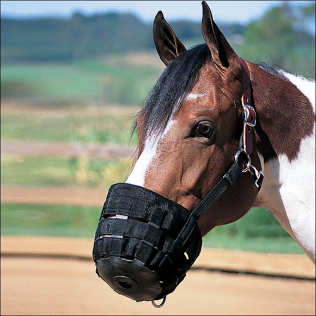 SMALL WEAVER HORSE NYLON RUBBER LINED GRAZING MUZZLE W/ LEATHER CROWN BLACK