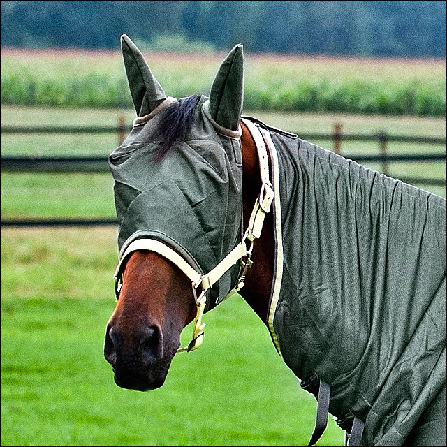 SMALL LARGE HORZE SOFT POLYESTER DURABLE COMFORTABLE  FLY MASK W/ FLEECE GREEN