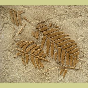 RAISED PLASTER STENCIL FERN FOSSILS, Reusable stencils for wall and backsplashes