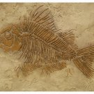 RAISED PLASTER STENCIL LARGE FOSSIL FISH STURDY 12MIL!
