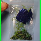 Aquarium-in-a-Bag  -  Scout SWAPS Girl Craft Kit - Swaps4Less