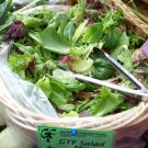 Gourmet Lettuce Mix- **Seeds** 6 Varieties **Containers**