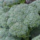 Waltham  Heirloom Broccoli Seeds