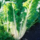 Fordhook Swiss Chard Seeds-**High in Antioxidants**