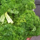 Curled Heirloom Triple Moss Parsley Seeds-Cooks Favorite!
