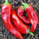 Marconi Rosso Red Sweet Pepper Heirloom Seeds-Imported-Italy
