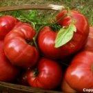 Heirloom Organic **PINK** Brandywine Tomato Seeds