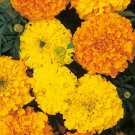 "African ""Cracker Jack"" Mix Marigold Seeds-No Fail! **Plant with Veggies**"