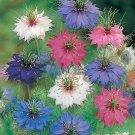 Nigella Persian Jewels Mixed Seeds**Cut Flower**