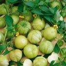 .Green Verde Tomatillos Seeds Must Have 4 Salsa