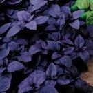 Purple Basil Seeds-Deep Purple Flowers! ORGANIC