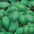 Basil Large Leaf Italian Organic Seeds **PESTO**