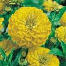 Zinnia Seeds**Canary Yellow Bird**