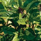 Basil Seeds**Cinnamon** Organic**Spicy & Sweet