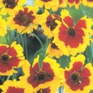 Coreopsis Seeds **Sunflower Family**Looks Like Daisy**