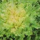 Lettuce Endive Seeds Full Heart Bavarian