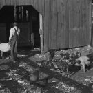 MARION POST WOLCOTT PHOTO VINTAGE ALABAMA PIG FARM 1939