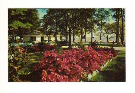 Vintage Postcard, Sea Gull Motel, Biloxi, Mississippi, Very Good Condition