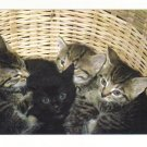 New Postcard,   Kittens in a Basket, Very Good Condition