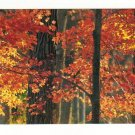 New Postcard, Maple Trees in Fall, The Morton Arboretum, Very Good Condition