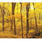 New Postcard, East Woods in Fall, The Morton Arboretum, Very Good Condition