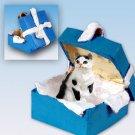 Shorthair Black & White Tabby Blue Gift Box Ornament