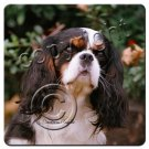 Cavalier King Charles, Black & White Coasters