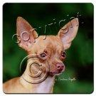 Chihuahua, Tan & White Coasters