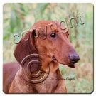 Dachshund, Red Coasters