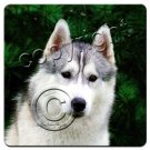 Husky, Gray & White, Blue Eyes Coasters