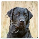 Labrador Retriever, Black Coasters