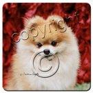 Pomeranian, Red Coasters