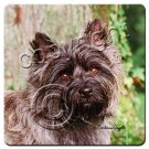 Cairn Terrier, Gray Coasters