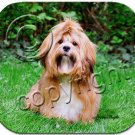 Lhasa Apso, Brown Mouse Pad