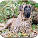 Staffordshire Bull Terrier, Brindle  Mouse Pad