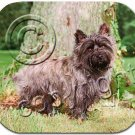Cairn Terrier, Gray Mouse Pad