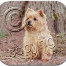 Cairn Terrier, Red Mouse Pad
